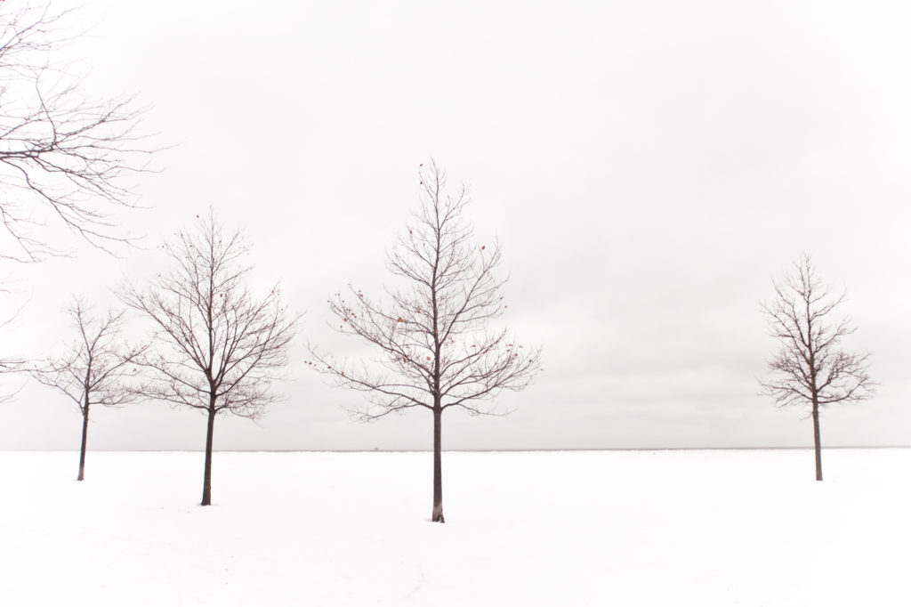 Chicago Winter Trees
